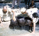 Afghan men bathing sheep