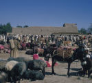 Afghanistan, animal market in Kabul