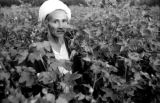 Afghanistan, portrait of cotton grower in crop
