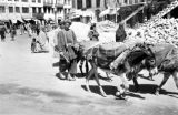 Afghanistan, man driving donkeys through Kābul street