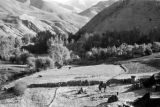 Afghanistan, animals grazing in valley below Hindu Kush mountains
