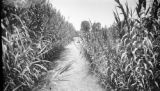 Peru, irrigation canal at the western boundary of Hacienda Zavala