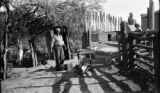 Argentina, cook preparing freshly killed sheep near corral at Estancia Jones