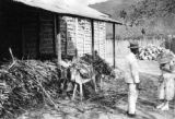 Venezuela, children unloading donkey at Trapiche San Miguel sugar mill with Harriet Platt