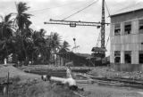 Guyana, unloading sugarcane from punts via crane at sugar mill at Enmore plantation