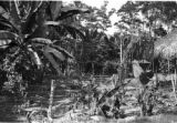 Colombia, yard at cocoa plantation in Valle del Cauca department