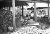 Guyana, laborers processing coconuts at Hope Estate in Demerara-Mahaica region
