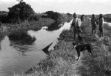 Guyana, pulling in fishing net from navigation canal at Enmore plantation