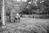 Colombia, cowboy opening corral gate at Hacienda El Hatico in Valle del Cauca department