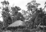 Colombia, thatched roof shelter at cocoa plantation in Valle del Cauca department