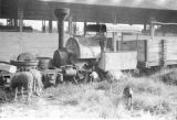 Venezuela, animals grazing around old locomotive in La Ceiba