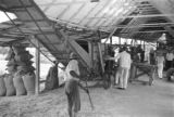 Guyana, rice threshing at Hope Estate