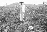 Brazil, owner standing in harvested cotton field at Sitio São João