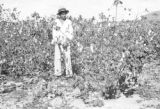 Brazil, boy standing in harvested cotton field at Sitio São João