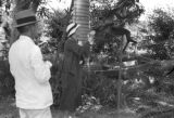 Guyana, Mr. Walcott and Harriet Platt feeding monkeys at Hope Estate