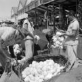 Brazil, men examining cabbage at marketplace
