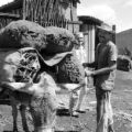 Brazil, men standing near donkey carrying materials