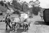 Chile, man on road with cattle-drawn cart