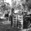 Chile, farmers loading grape crates onto truck at vineyard in Llaillay