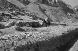Peru, man with child riding mule on mountain
