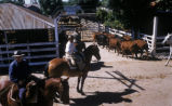 Buenos Aires (Argentina), horseback riding and cattle