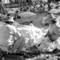 Peru, farmers sorting cotton on plantation