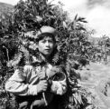 Peru, man carrying leaves in Pisac