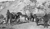 Argentina, mules and horses at camp