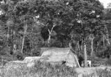 Peru, thatched roof hut in village