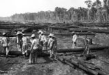 Brazil, workers moving log in Pará