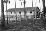 Brazil, stilt house seen through rubber trees