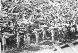 Brazil, laborers loading wood off shore of Palmares