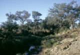 Zimbabwe, view of river flowing through bush country