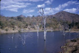 Zambia and Zimbabwe, dead trees in Kariba Lake
