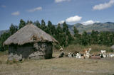 Kenya, farm animals resting near thatched-roof hut