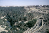 Tunisia, bird's-eye view of La Corbeille desert oasis in Nefta surrounded by palm trees