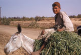 Egypt, Bedouin boy riding a donkey