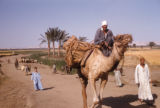 Egypt, Bedouin man riding a camel