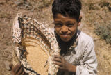 Egypt, boy holding grains in a basket
