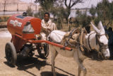 Egypt, boy driving a kerosene tank pulled by a donkey