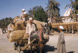 Egypt, donkey-pulled cart full of cotton
