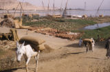 Egypt, donkeys carrying goods near the shoreline