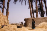 Egypt, farm village scene