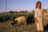Egypt, girl tending goats