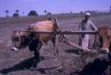 Egypt, man plowing with oxen