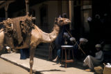 Egypt, men and a camel on city street