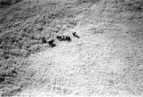 Mozambique, close up aerial view of elephants south of Maputo, possibly in the Maputo Special...