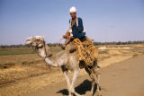Egypt, man riding a camel