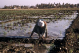 Egypt, man working in the fields