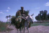 Egypt, pack-donkey near Cairo